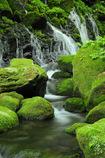 Moss world...