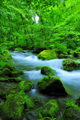Moss green...