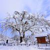 winter fine day...