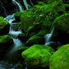 Beautiful green...