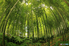 初夏の竹林