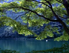 夏の湖畔 -T