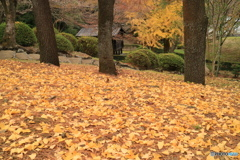 黄葉散る頃