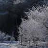 霜の降りた朝 -3 -T