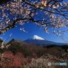 富士遠望 -T
