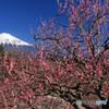 散歩道での寸景:岩本山から -T