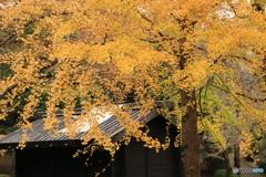 黄葉の下で -1