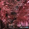 桜色の通り -T