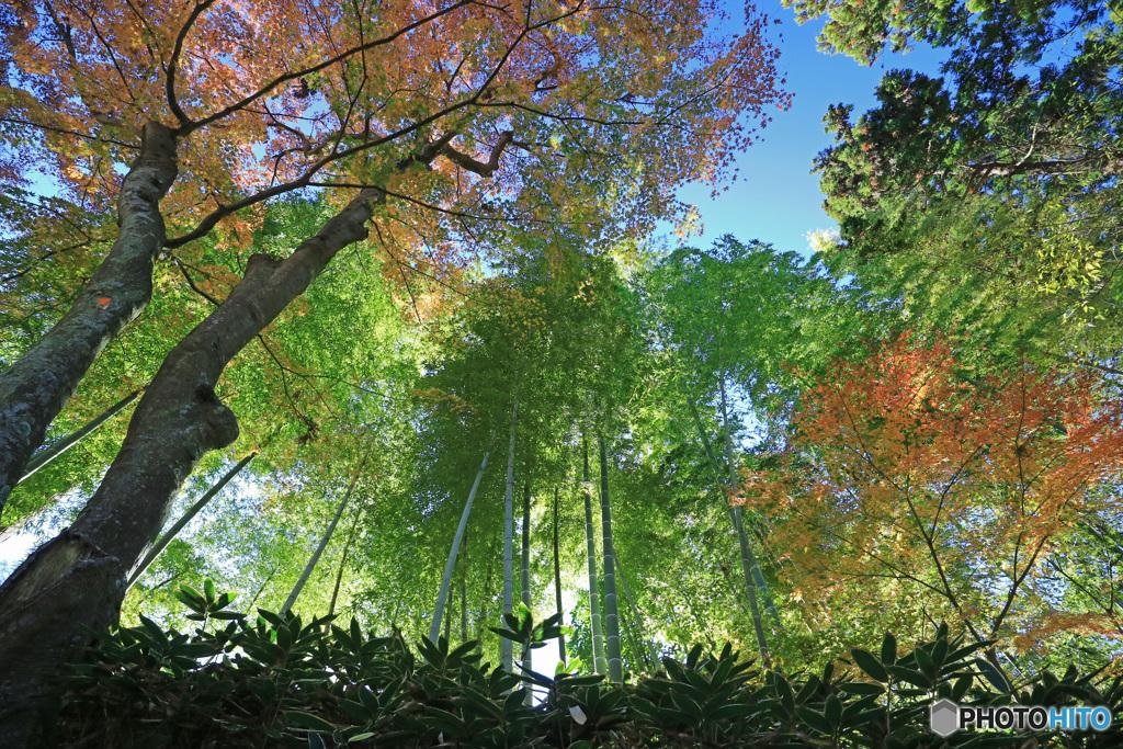 竹林の秋 -T