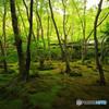 苔むす庭園 -T