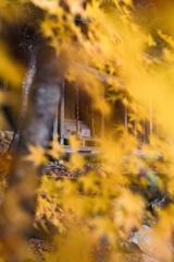 Autumn colored sanctuary