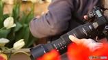 シグマ-50-500レンズと花