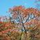 城址壁面の紅葉