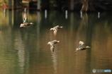 湖面を飛ぶ