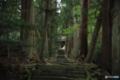 清水寺(せいすいじ)杉並木