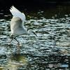 白鷺の舞 1