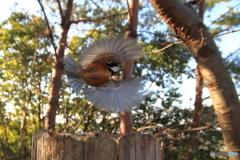 広角レンズで野鳥を撮ってみた 6