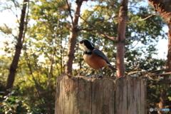 広角レンズで野鳥を撮ってみた 5