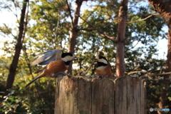 広角レンズで野鳥を撮ってみた 4