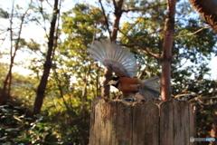 広角レンズで野鳥を撮ってみた 3