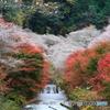 満開の桜と紅葉