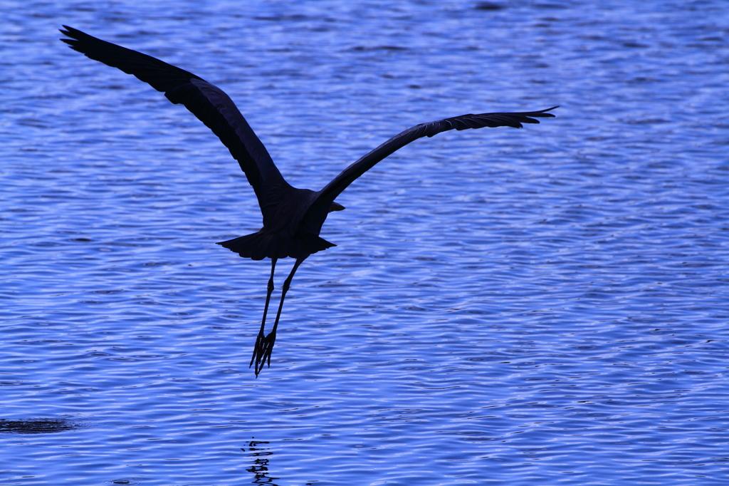 羽ばたき 2