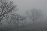 霧の中 モノクロ