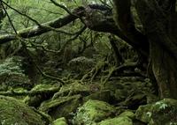 LEICA LEICA M (Typ 240)で撮影した(もののけ姫の森)の写真(画像)