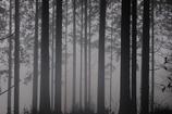 おとぎの森