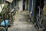 背戸屋の猫 その2