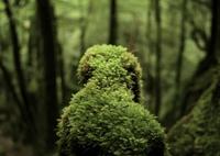 LEICA LEICA M (Typ 240)で撮影した(もののけの森の住民)の写真(画像)