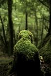 もののけの森の住民