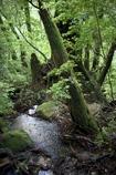 「雨の森」