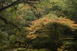 太古の森の秋バージョン2