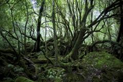 もののけの森
