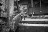 背戸屋の猫