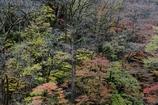 「秋の粧」
