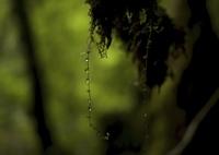 LEICA LEICA M (Typ 240)で撮影した(森と水の島)の写真(画像)