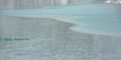 静冷の池 氷結