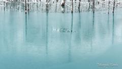 静冷の池2