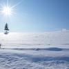陽下の雪原
