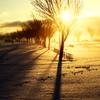 冬の陽差し