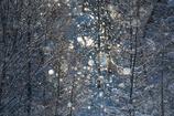 Winter fairies 19