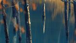 青い池寸景