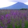 風薫る富士