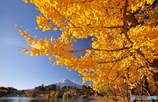 黄葉と富士山