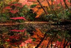 秋色最終章