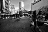 crossing Shibuya