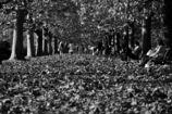 埋もれる秋