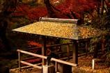 秋深まる東京(2)